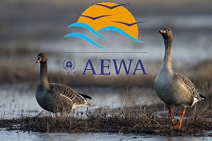 AEWA Goosemanagement logo