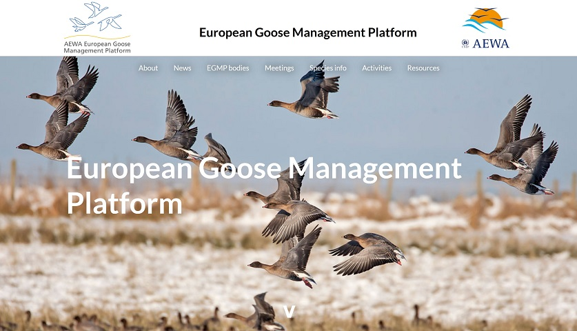 AEWA website Goosemanagement Plattform Homepage